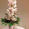 Ajándék csokor fehér cymbidium orchideával
