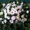 Temetési koszorú fehér virágokkal